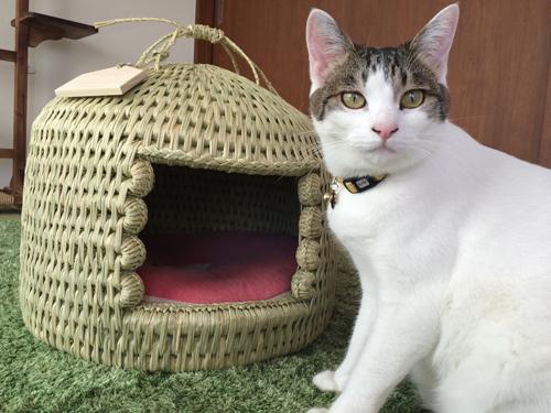猫つぐら(猫ちぐら)猫ちゃん写真1