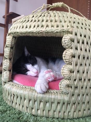 猫つぐら(猫ちぐら)2017、猫ちゃん写真2