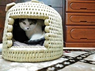 猫つぐら(猫ちぐら)りきちゃん
