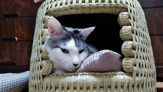 猫つぐら(猫ちぐら)りきちゃん2