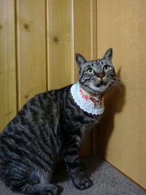 猫のおしゃれ首輪2リバーシブルバンダナフリフリレース、蝶と薔薇A