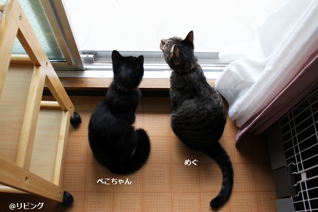 めぐ&ぺこ