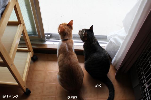 ぺこちゃん→をちびに入れ替わり