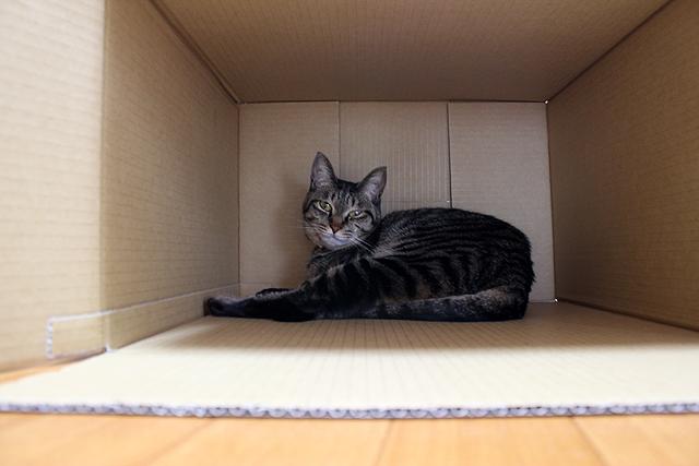 AIBOの箱の外箱