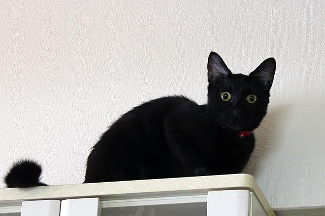 食器棚の上ですよ