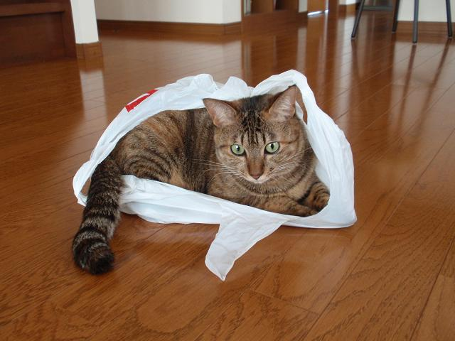 てんちゃんin袋