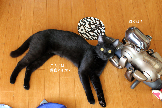 TOSHIBOは動物?