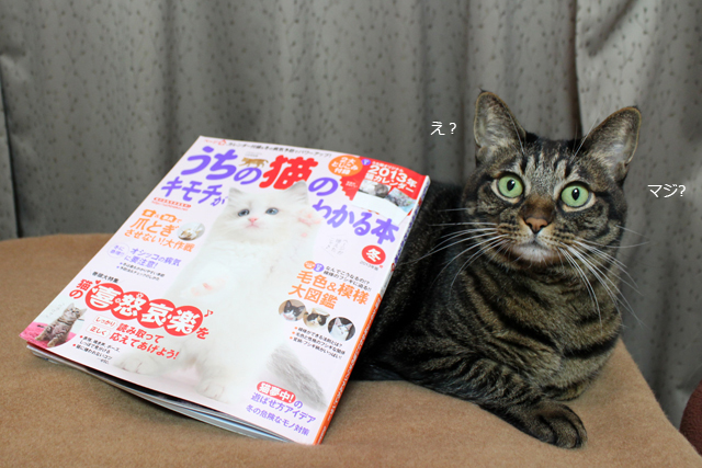 うちの猫のキモチがわかる本