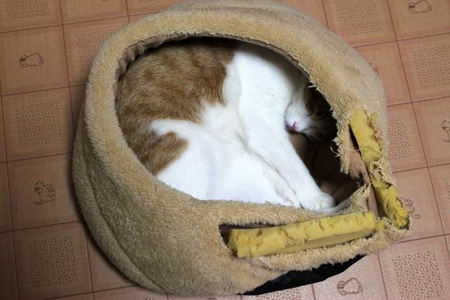 ココで寝ます