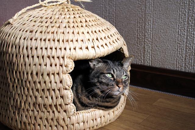 猫つぐら(猫ちぐら)