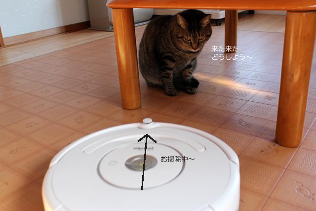 テーブルの下意味なし(^◇^;)