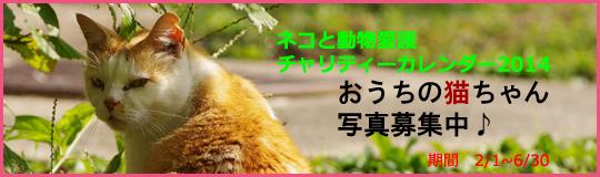 「ネコと動物愛護チャリティーカレンダー2014」おうちの猫ちゃん写真募集