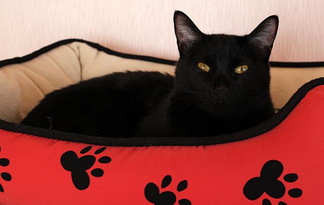 保護猫ぺこちゃん 体重:3.4kg