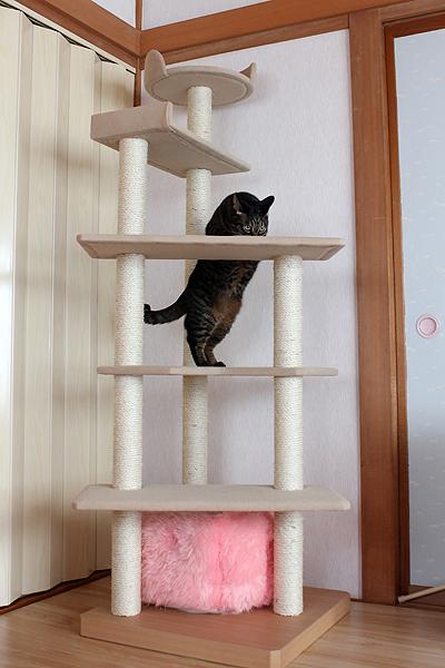 登ります!
