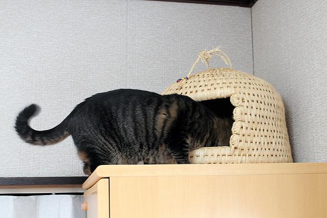 猫つぐら♪
