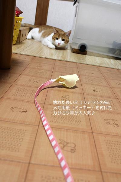 長いネコジャラシ~