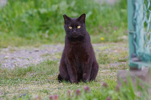 地域猫の耳先カット