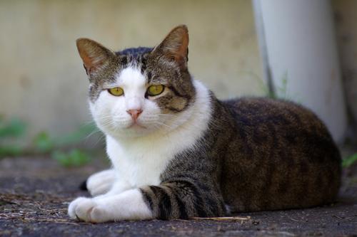 地域猫さん1