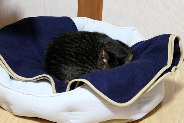 キャットベッドで寝てますよ