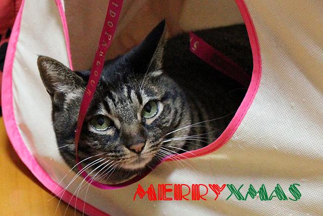 MerryChristmas♪