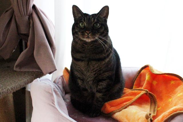 お行儀の良い猫