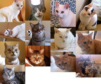 猫の里親募集