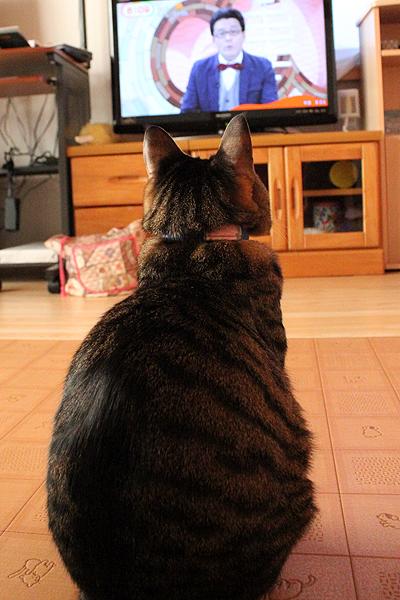めざましテレビ