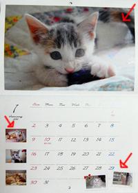 ネコと動物愛護チャリティーカレンダー2015 写真募集中です