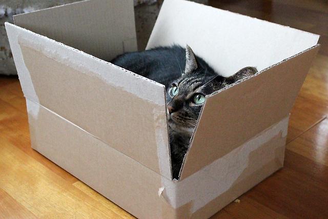 ダンボール箱♪