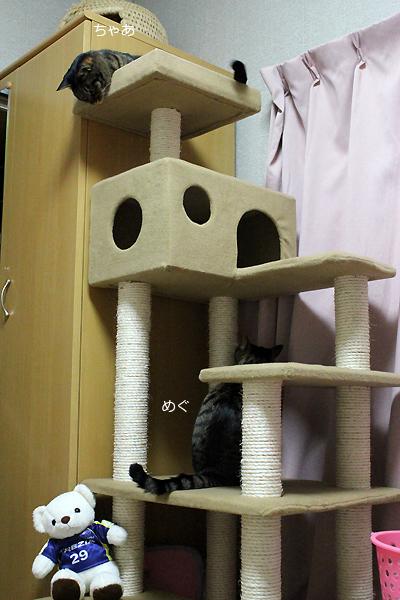 シニア用キャットタワー