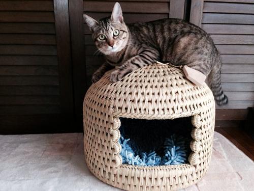 猫つぐら(猫ちぐら)お客さまより~猫堂~