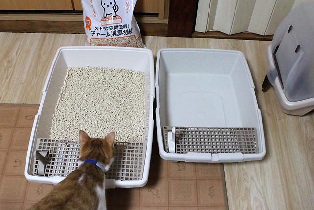 猫トイレ砂投入~