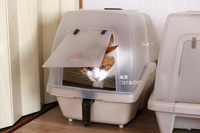トイレ小さい?