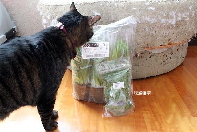 ポット3個と乾燥猫草