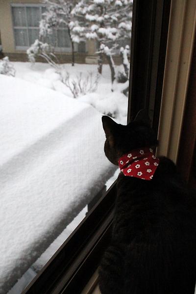 ちゃあさんの雪観察