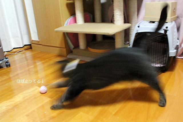 毛玉ボールで遊びます