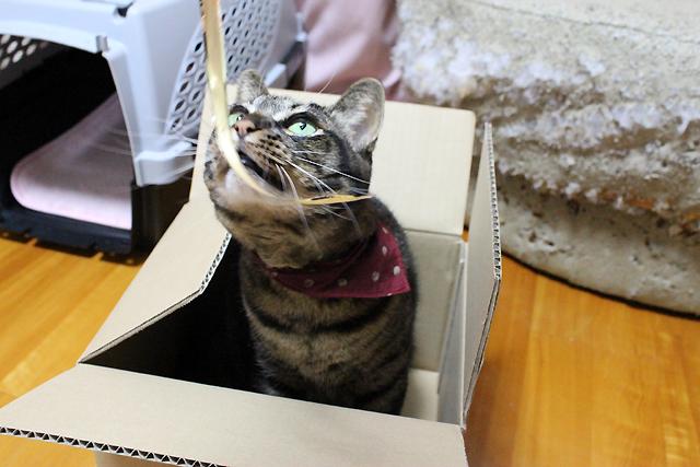お菓子の箱のひも
