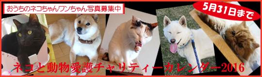 ネコと動物愛護チャリティーカレンダー2016