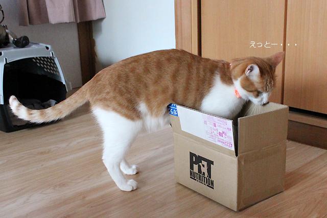 箱小さい・・・