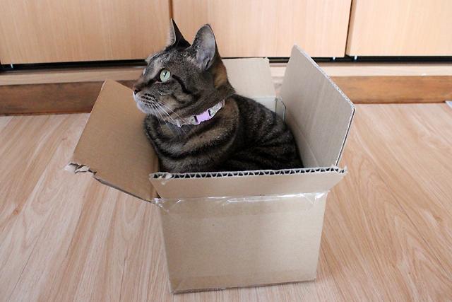 小さいダンボール箱