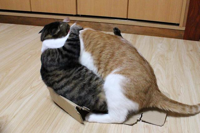 ダンボール箱の取り合い