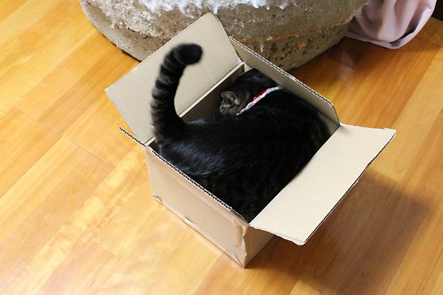 箱は周りながら入ります