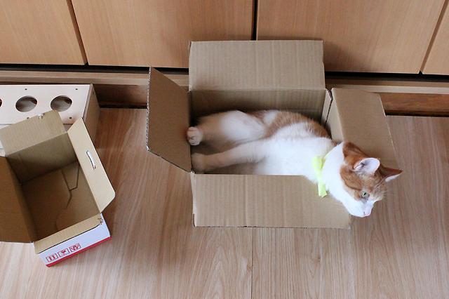 小さい箱はあきらめました