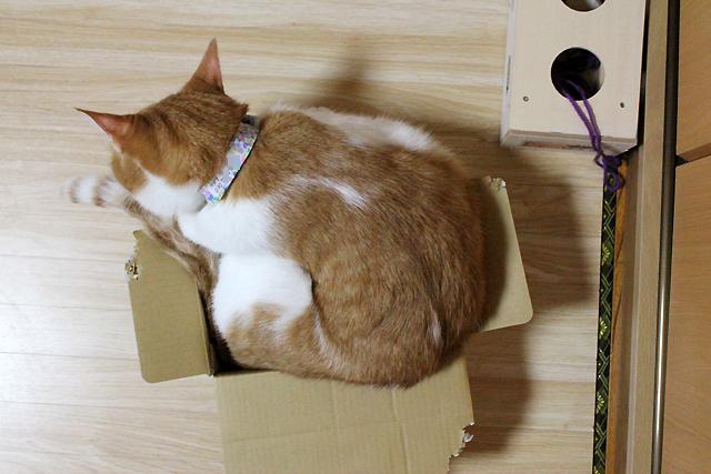 箱に入っているというのか?