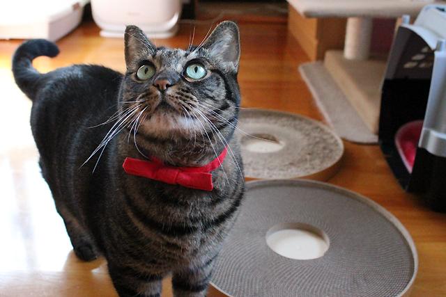 猫堂のおしゃれリボン首輪