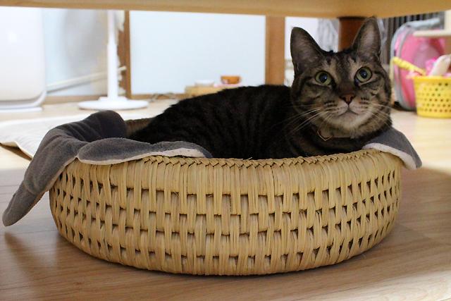 猫つぐら型ベッド、おめぐさん入ってます(^^)