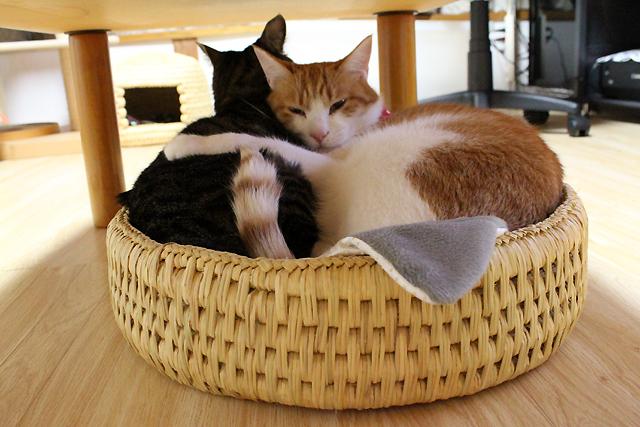 猫つぐら製法猫ベッド