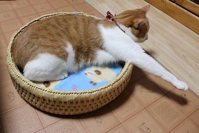 猫つぐら丸型ベッド、こんどはをちび