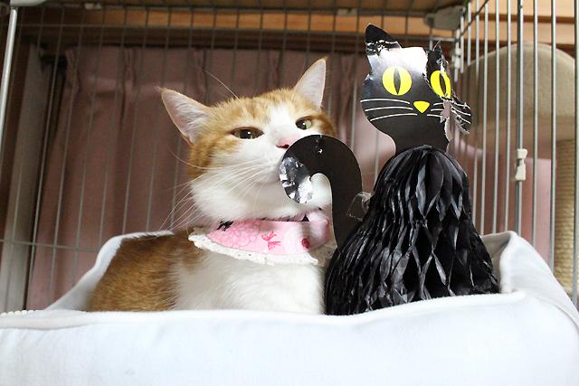 ハロウィンの黒猫ちゃんが・・・