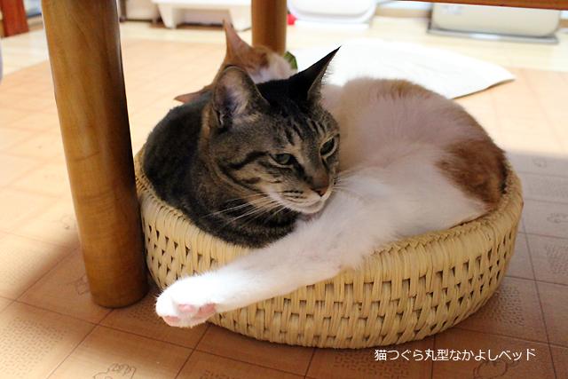 猫つぐら丸型なかよしベッド、めぐとをちび